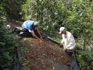 familia-de-agricultores-vira-referencia-em-qualidade-de-cafe